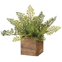 Maidenhair dans une boîte en bois 11''