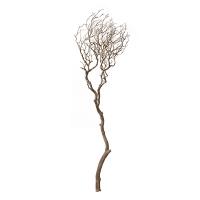 Branche de manzanita sablé 6''