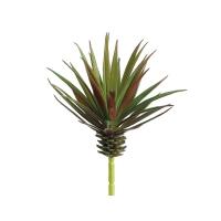 Marginata rouge et vert 7,8''