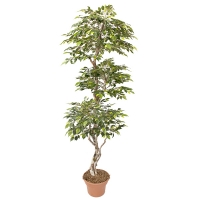 Arbre artificiel, mini ficus vert et lime 7'