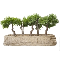 Mini plante de myrte sur bûche 10 x 18''