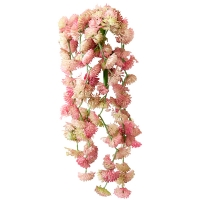 Petites succulentes roses et retombantes 14''
