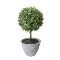 Babytear ball mini topiary 12''