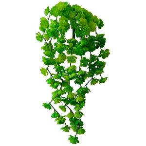 Petites succulentes vertes et  retombantes 12''