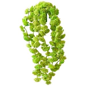 Petites succulentes retombantes vert olive 12''