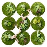 Circular Green Wall