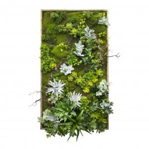 Mur Végétal, Mousse, Plantes Grasses et raicnes