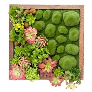 Mur végétal de petites plantes grasses