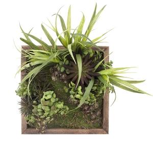 Mur végétal carré, 12 x 12''