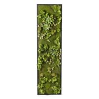 Mur vertical de succulentes