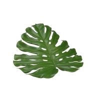 Napperons feuille de monstera 18''