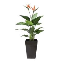 Oiseau du paradis à fleurs oranges 4,5'