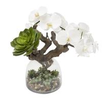 Orchidée, bois et plantes grasses en vase