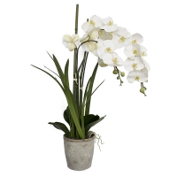Orchidée en pot blanc 34''