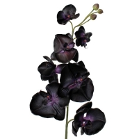 Artificial flower Phalaenopsis orchid 10 black flowers and 3