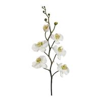 Orchidée phalaenopsis crème 32''
