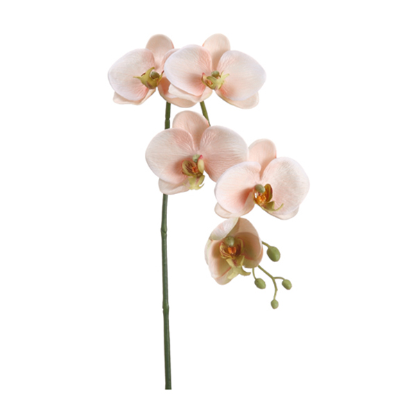 orchid e phalaenopsis rose p le sur tige 26 39 39 d cors v ronneau. Black Bedroom Furniture Sets. Home Design Ideas