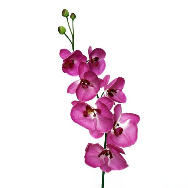 Fleur artificielle orchid e fushia 2 tons 45 39 39 d cors - Fushia plante entretien ...