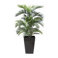5' Areca palm tree