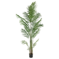 Areca Palm Tree, 7'