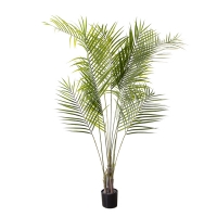 Areca palm in a black pot 65''