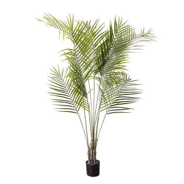Palmier areca dans pot noir 65 39 39 d cors v ronneau for Palmier dans pot