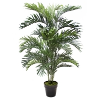 4,5' Outdoor areca palm, 2 years warranty against discolorat
