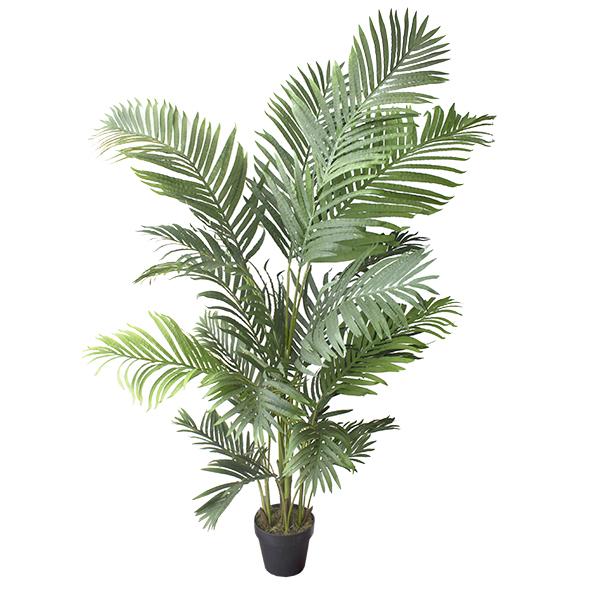 Palmier areca ext rieur 5 5 39 d cors v ronneau for Palmier exterieur