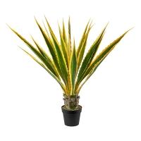Palmier cycas, 27,5''