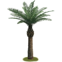 Outdoor palm tree 12.5 feet, 2 years warranty