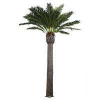Palmier extérieur 20', garantie 2 ans