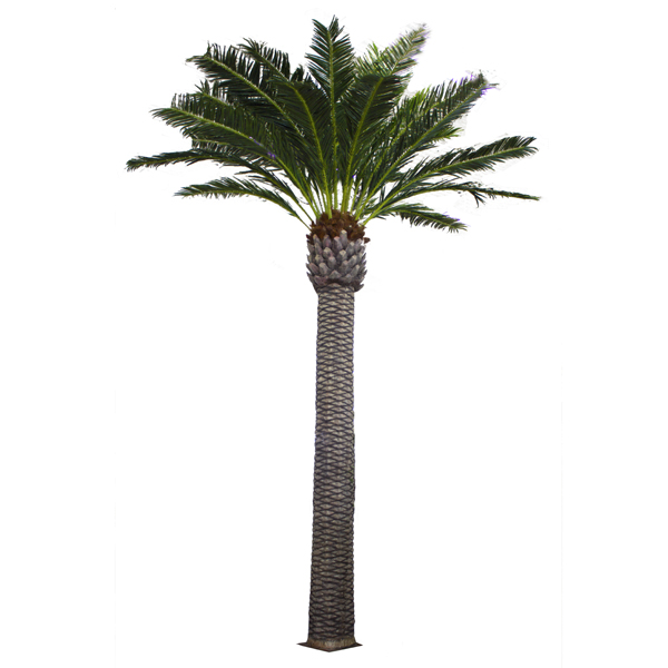 palmier ext rieur 20 39 garantie 2 ans d cors v ronneau. Black Bedroom Furniture Sets. Home Design Ideas