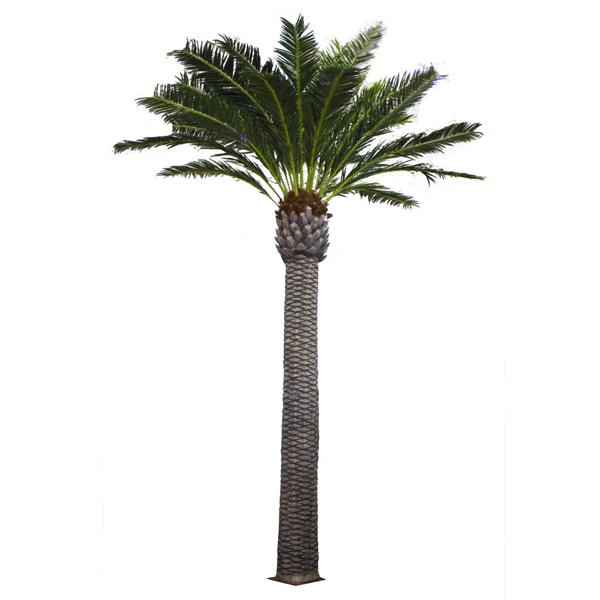 Palmier ext rieur 20 39 garantie 2 ans d cors v ronneau for Plante palmier exterieur