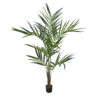 Kentia Palm Tree, 6'