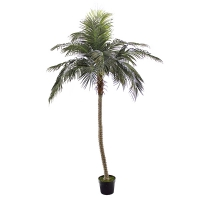 9' Outdoor phoenix palm tree, 2 years warranty