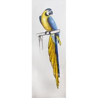 Blue and yellow parrot canvas, high gloss finish 20 x 60''
