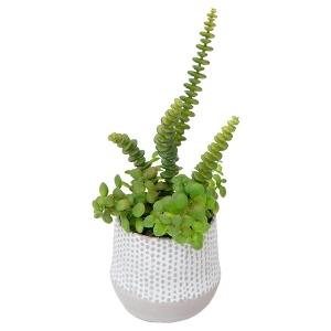 Petit arrangement de plantes grasses