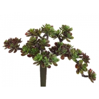 5'' Green and burgundy sedum pick