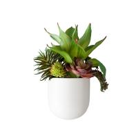 Petit pot mural blanc, plantes grasses