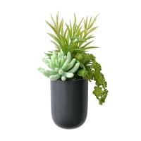 Petit pot mural noir, plantes grasses