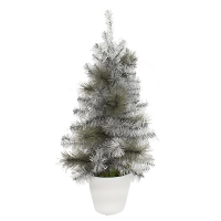 2' Small silver spruce in ceramic pot