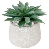 Potted Small Agave