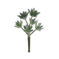 Pic de minis plantes grasses verdâtres 11''