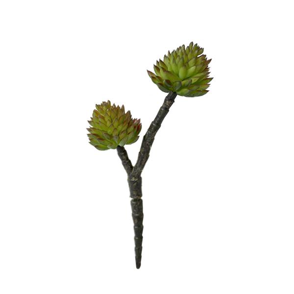 pic de petites plantes grasses vert jaune 7 39 39 d cors. Black Bedroom Furniture Sets. Home Design Ideas