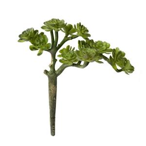 Pic de petites succulentes vertes, 6''