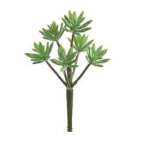 Pic de plante grasse 11''