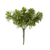 Pic de podocarpus