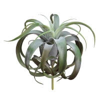 12'' Tillandsia pick