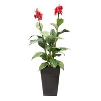 Artificial plant, 6' Canna with red flowers