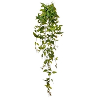 Wandering Jew Plant, 41''